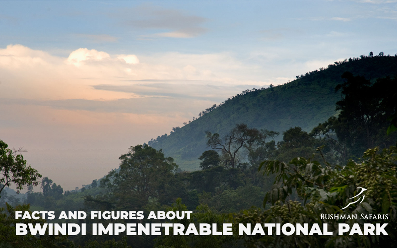 Facts And Figures About Bwindi Impenetrable National Park